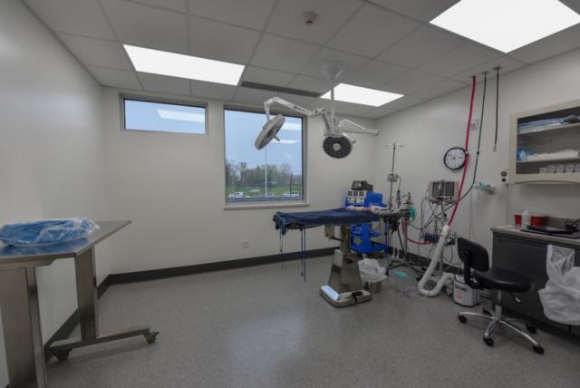 veterinary specialty, specialty vet hospital, specialty veterinary hospital, veterinary surgery, surgeon, vet surgery