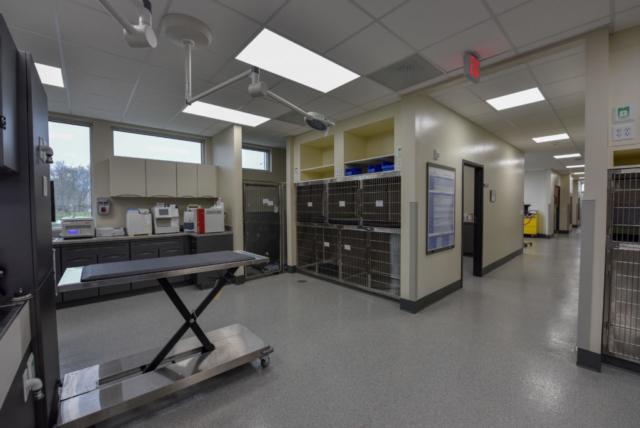 veterinary specialty, specialty vet hospital, specialty veterinary hospital, veterinary ultrasound, emergency vet, emergency vet hospital
