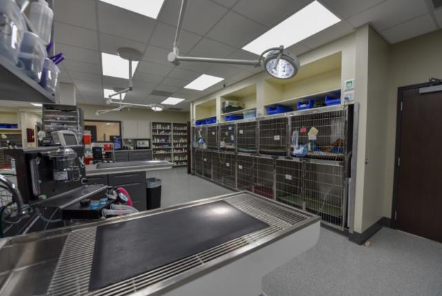 veterinary specialty, specialty vet hospital, specialty veterinary hospital, emergency vet, ccu