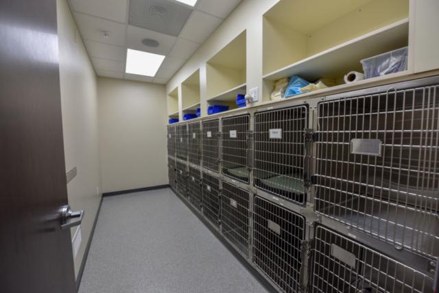 veterinary specialty, specialty vet hospital, specialty veterinary hospital