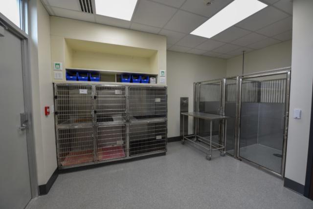 veterinary specialty, specialty vet hospital, specialty veterinary hospital, veterinary isolation, parvovirus